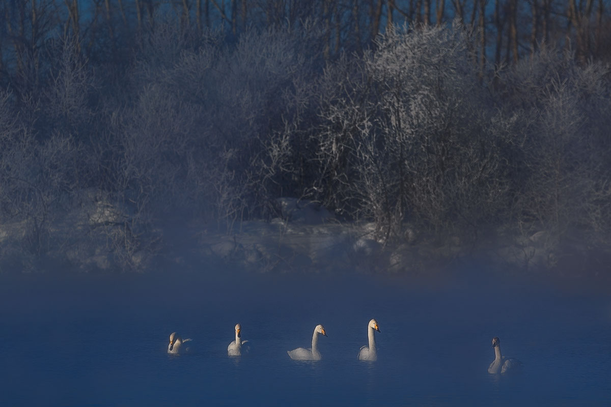 Dancing swans: Beautiful photographs by Dmitry Kupratsevich - 2