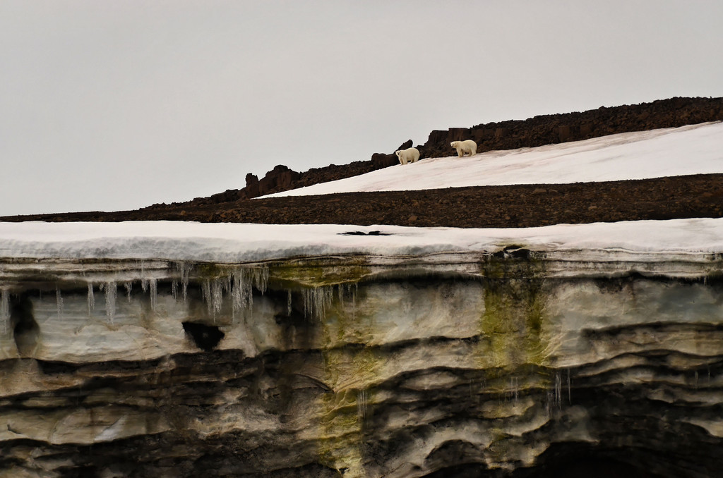 Northernmost point of Russia: Cape Fligely, Franz Josef Land - 8