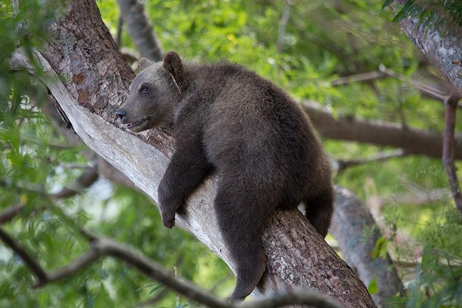 Russian bears: Photos of ferocious animals from Kamchatka - 8