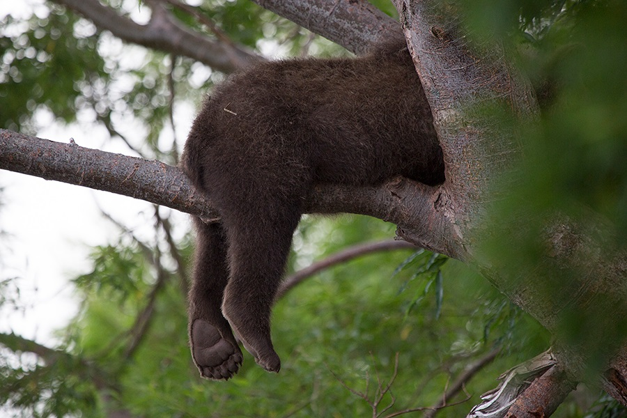 Russian bears: Photos of ferocious animals from Kamchatka - 9