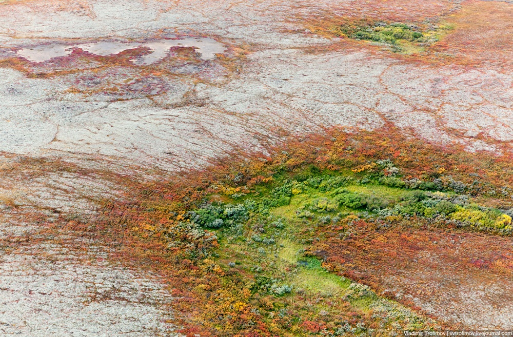 Russian Tundra: Bizarre patterns of the Norths wild nature - 6