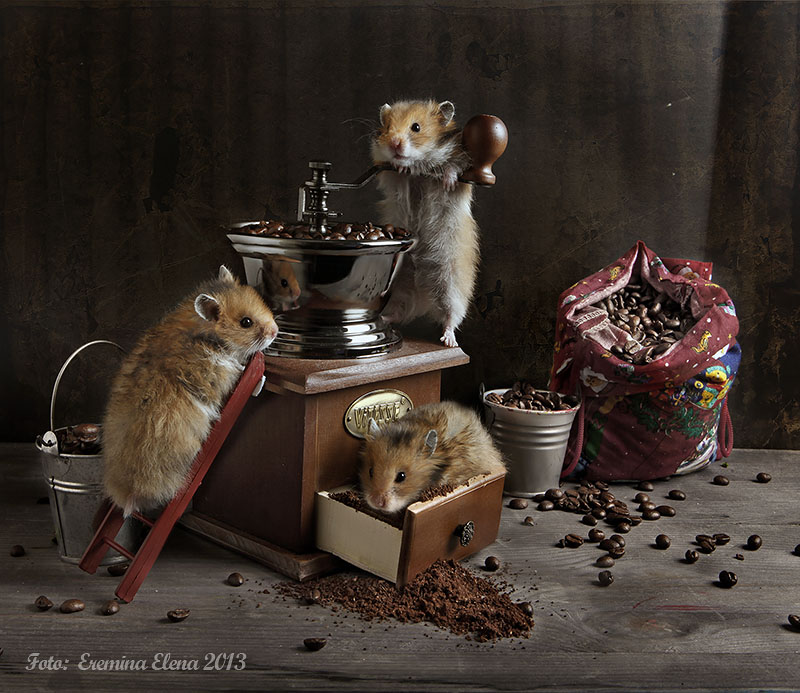 Unknown hamsters life: Humorous photos by Elena Eremina - 10