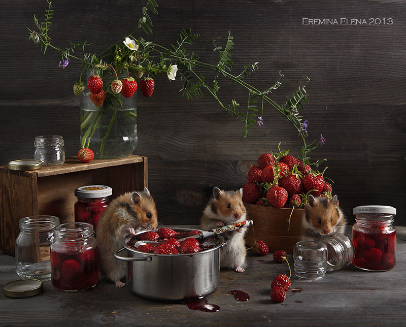 Unknown hamsters life: Humorous photos by Elena Eremina - 13