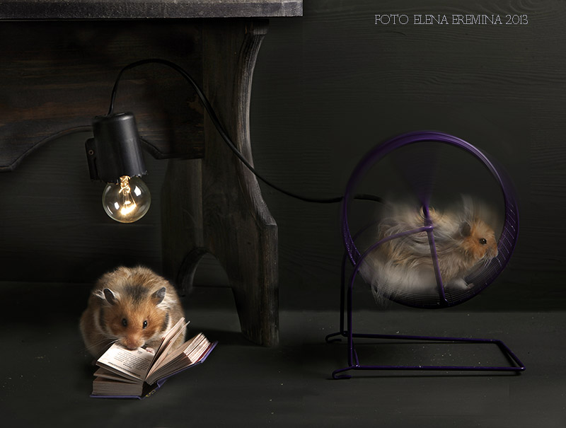 Unknown hamsters life: Humorous photos by Elena Eremina - 17