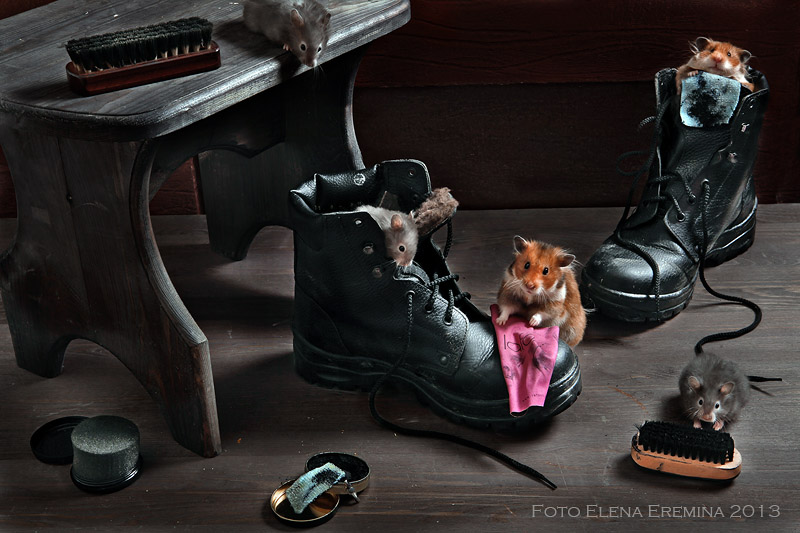 Unknown hamsters life: Humorous photos by Elena Eremina - 23