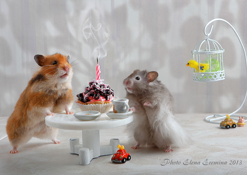 Unknown hamsters life: Humorous photos by Elena Eremina - 27