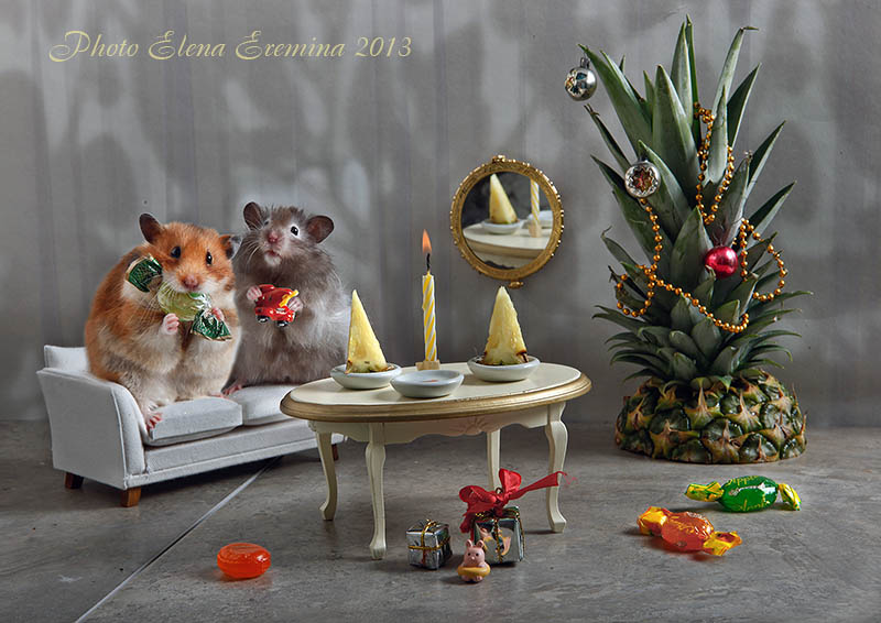 Unknown hamsters life: Humorous photos by Elena Eremina - 28