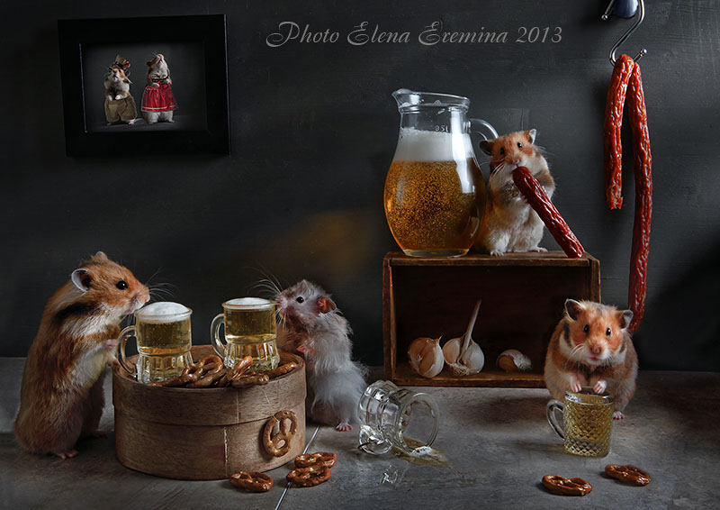 Unknown hamsters life: Humorous photos by Elena Eremina - 29