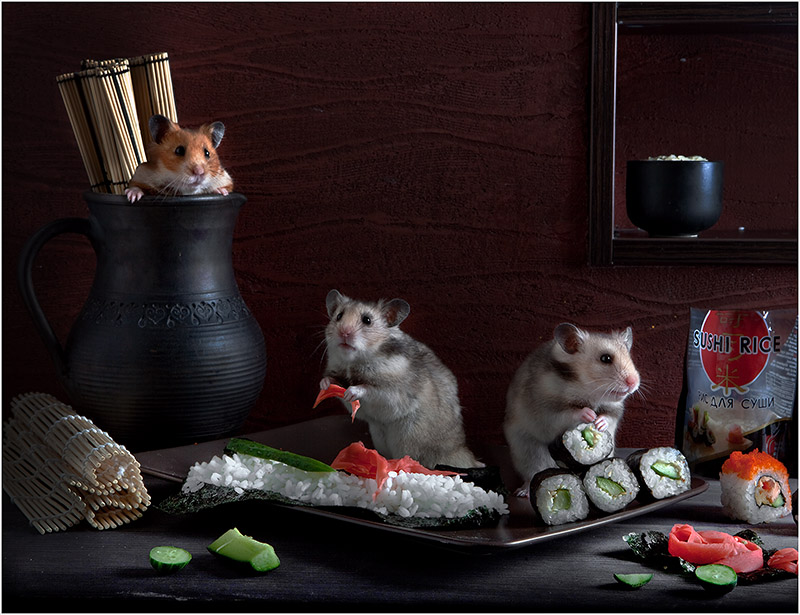 Unknown hamsters life: Humorous photos by Elena Eremina - 5