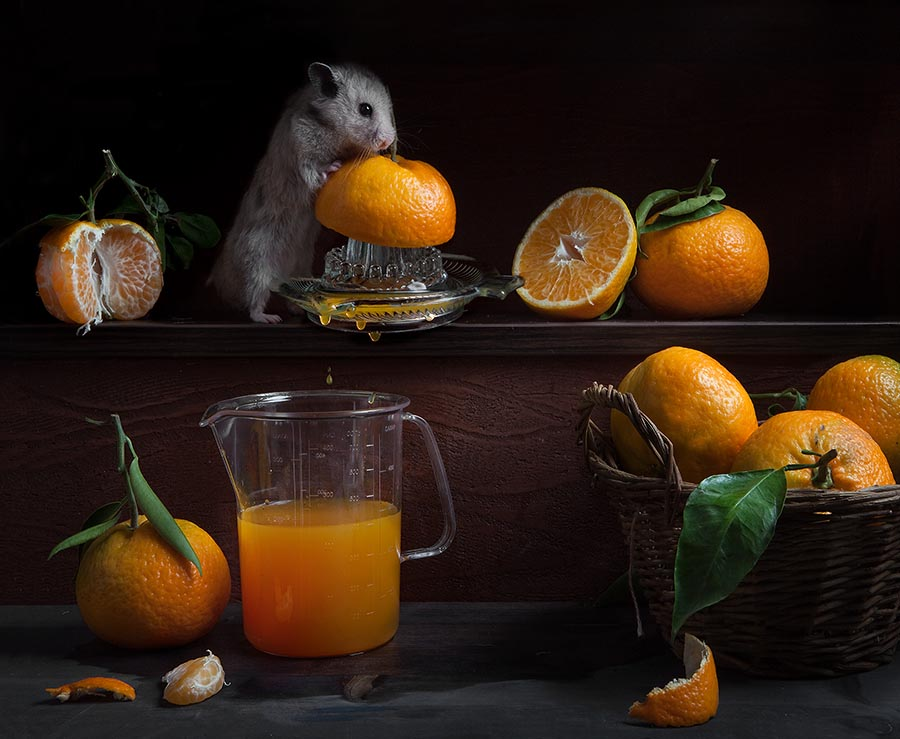 Unknown hamsters life: Humorous photos by Elena Eremina - 9