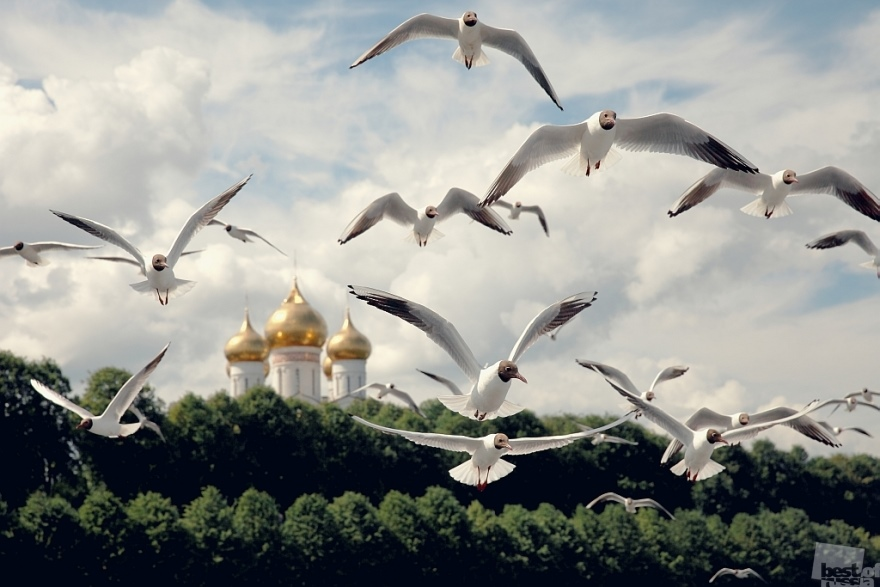 The Best of Russia 2014: 100 greatest photos of the contest - 72
