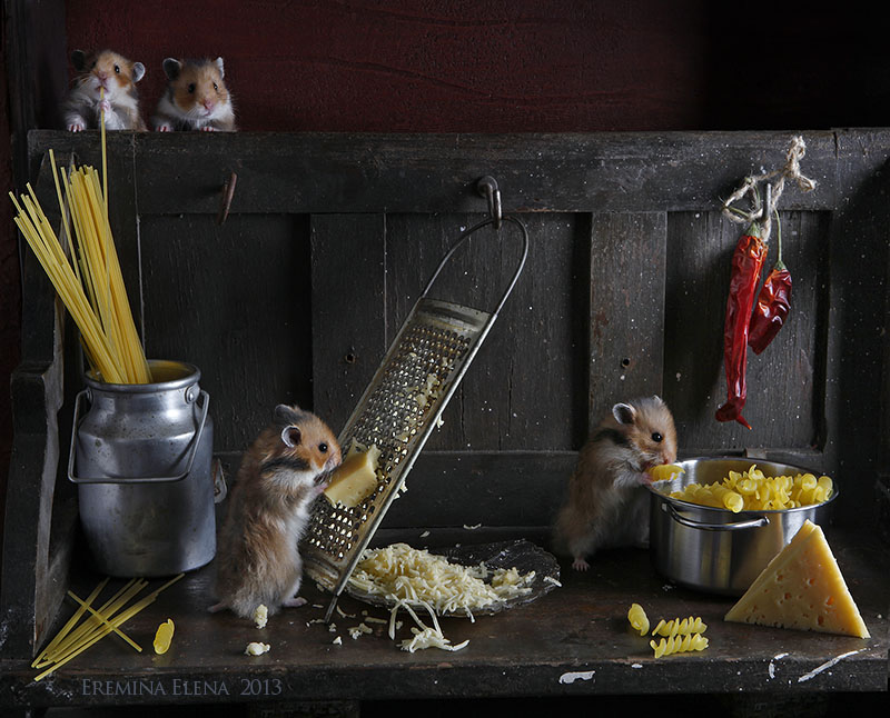 Unknown hamsters life: Humorous photos by Elena Eremina - 11