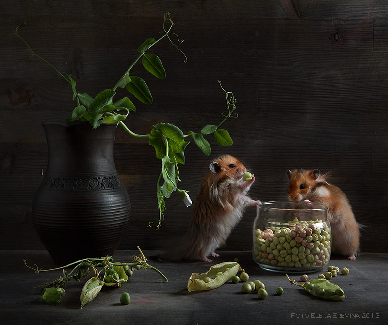 Unknown hamsters life: Humorous photos by Elena Eremina - 14
