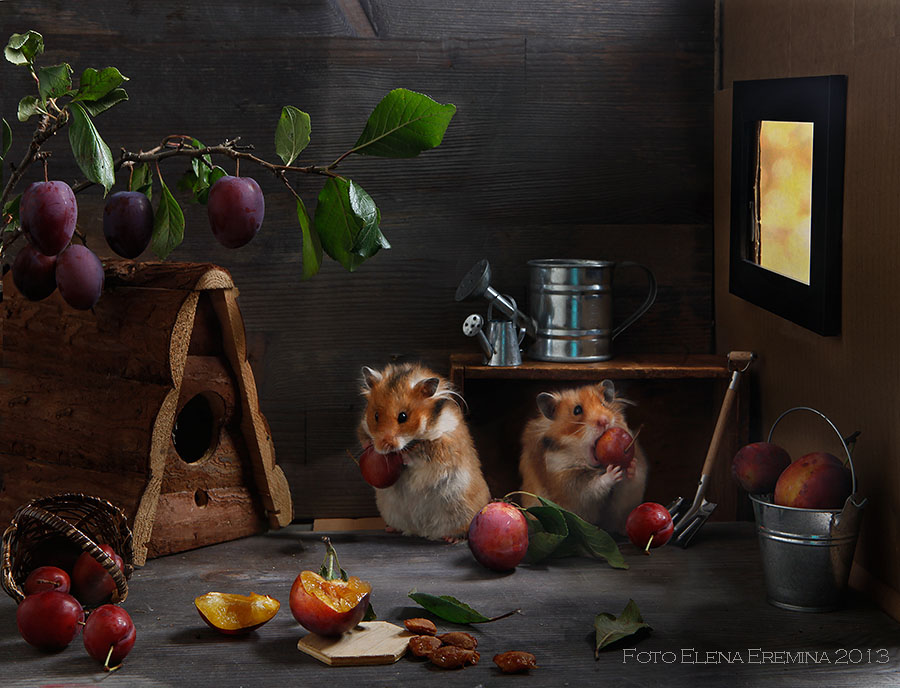 Unknown hamsters life: Humorous photos by Elena Eremina - 15