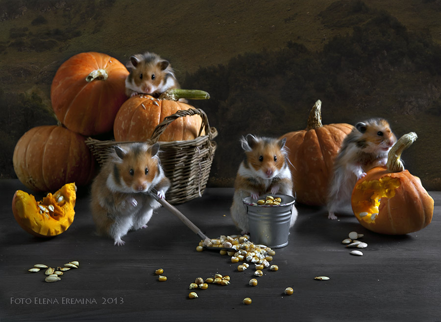 Unknown hamsters life: Humorous photos by Elena Eremina - 16