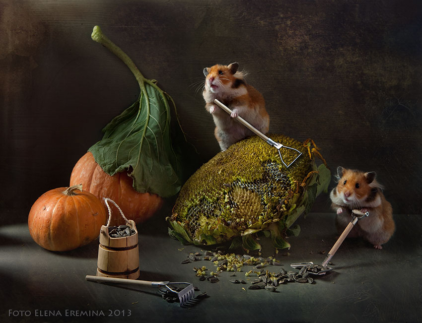 Unknown hamsters life: Humorous photos by Elena Eremina - 18