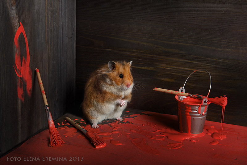 Unknown hamsters life: Humorous photos by Elena Eremina - 20