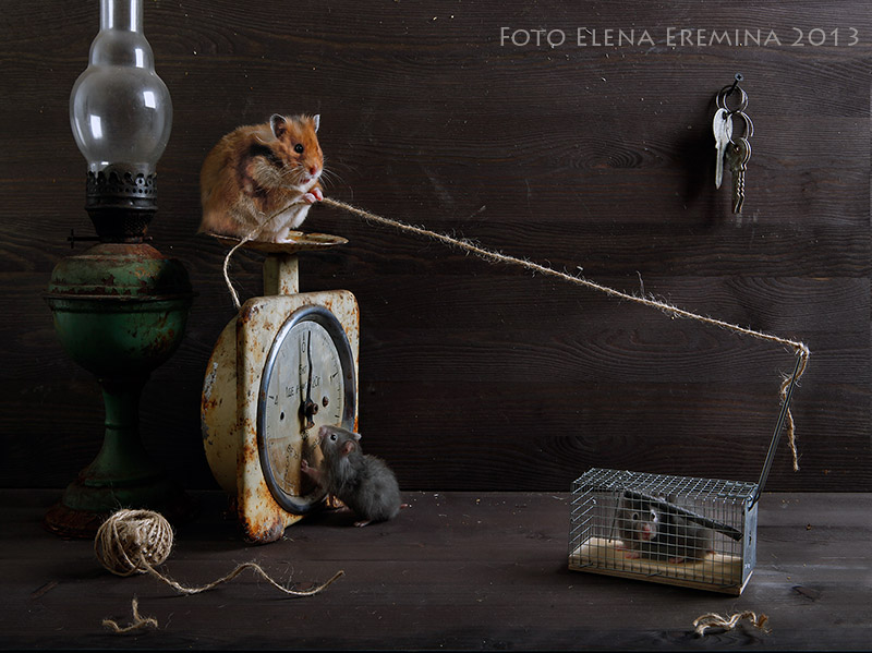 Unknown hamsters life: Humorous photos by Elena Eremina - 22