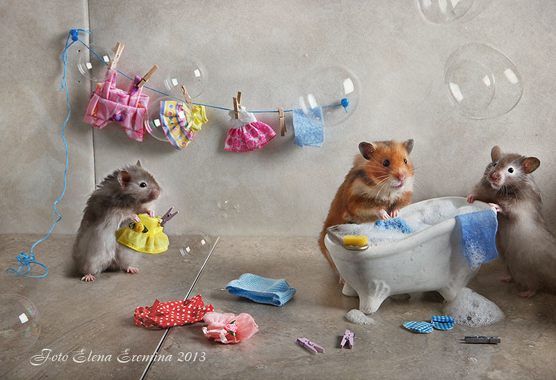 Unknown hamsters life: Humorous photos by Elena Eremina - 25