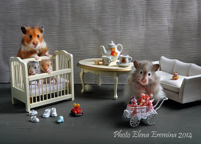 Unknown hamsters life: Humorous photos by Elena Eremina - 30