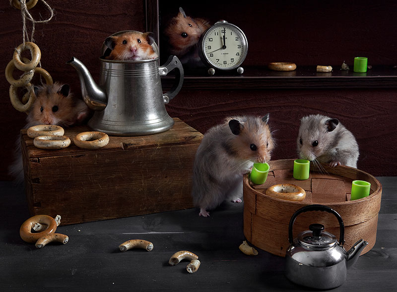 Unknown hamsters life: Humorous photos by Elena Eremina - 6