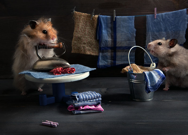 Unknown hamsters life: Humorous photos by Elena Eremina - 7