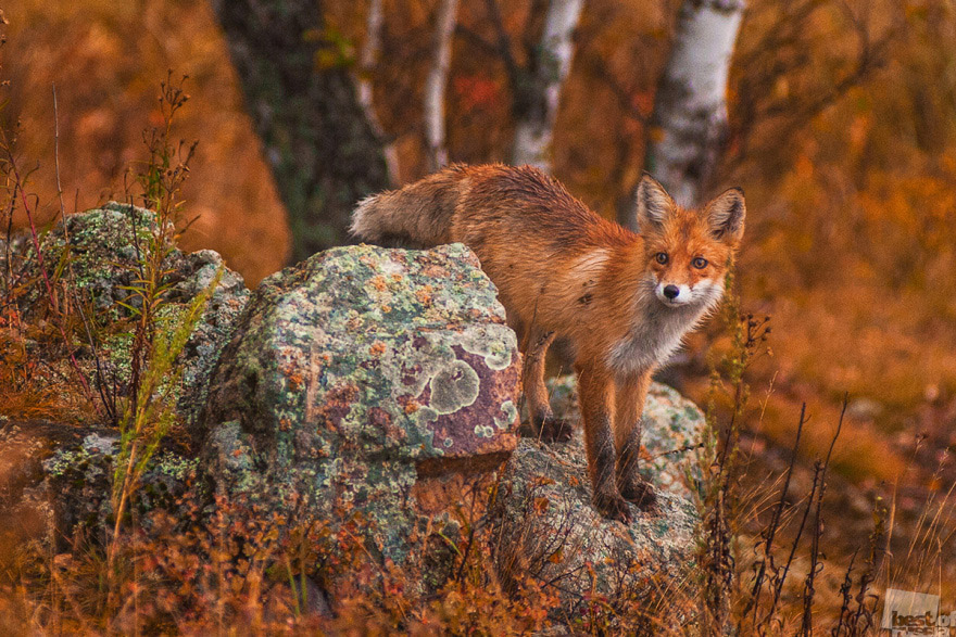 The Best of Russia 2016: 100 most amazing photos of the contest - 15