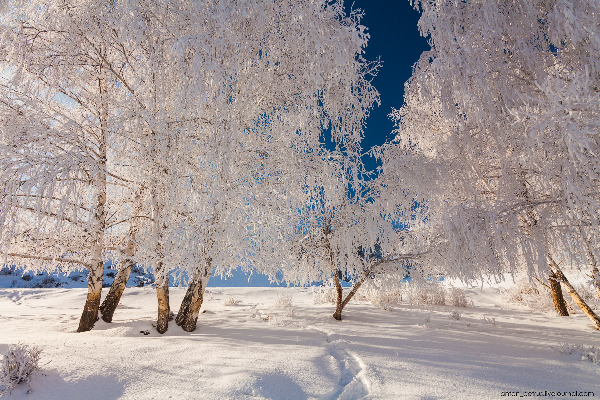 Severe but wonderful Altai winter in photos by Anton Petrus - 7
