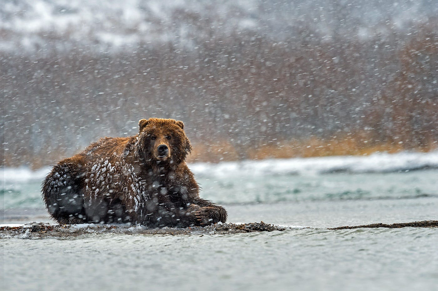 Ungentle charm of Kamchatka bears in photos by Sergey Ivanov - 24