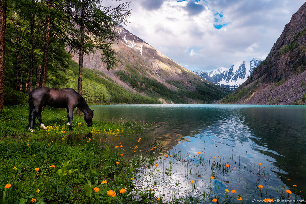100 greatest photos from the contest Wild Nature of Russia 2016 - 4